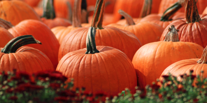 Fall Harvest Picnic