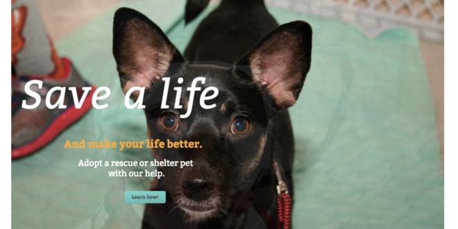 United Dog Rescue